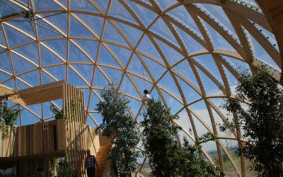 Эвкалиптовое дерево в Куполе Видения