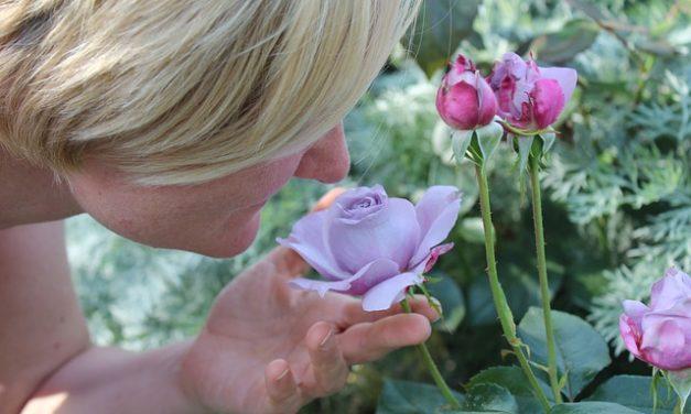 Как ароматические вещества воздействуют на наш организм